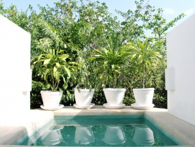 Garden View Suite with Plunge Pool